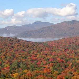 Adirondack Autumn: The forest in full bloom